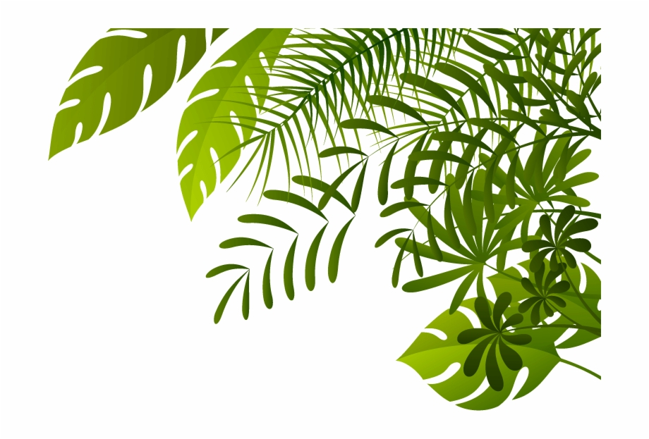 Jungle Png Image.