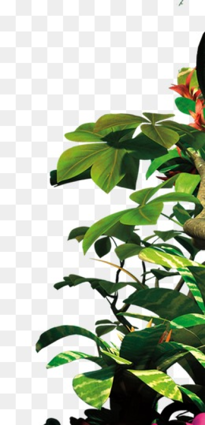 Download Free png Jungle Leaves PNG Images.