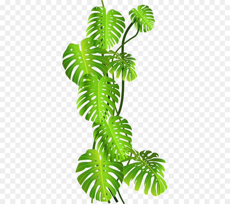 Download Free png Tropics Jungle Tropical rainforest Clip art Green.