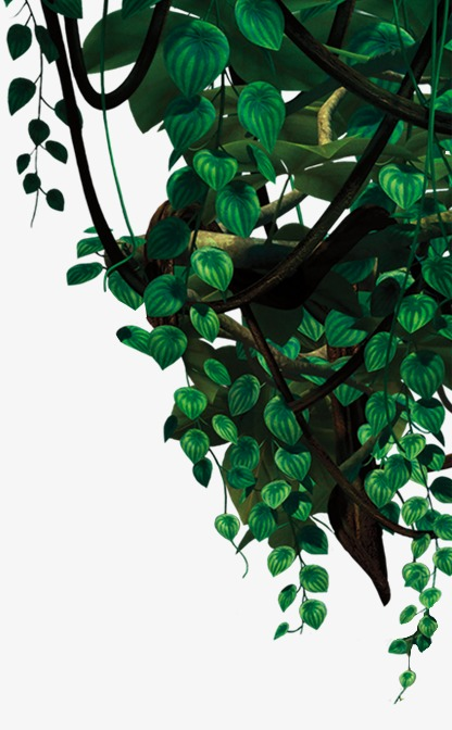 Leaves, Jungle, Thicket PNG Transparent Image and Clipart for Free.