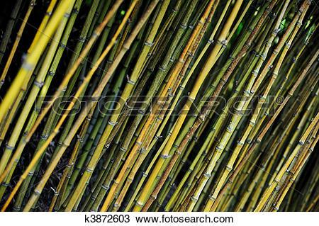 Stock Photo of Bamboo jungle.