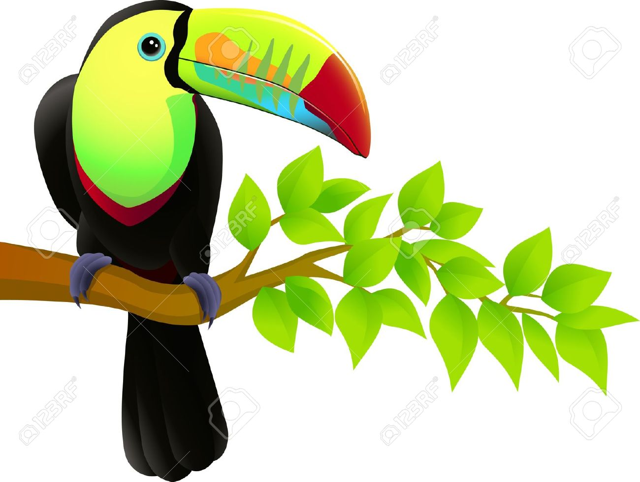 Toucan Bird Royalty Free Cliparts, Vectors, And Stock Illustration.