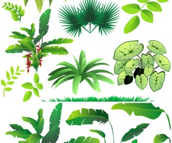 Jungle Plants And Trees Clipart.