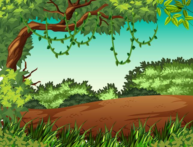 Jungle landscape background scene.