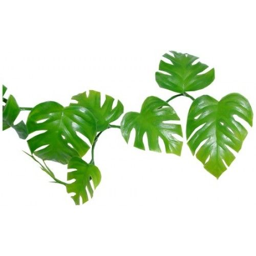 Jungle vine clipart 2 » Clipart Station.