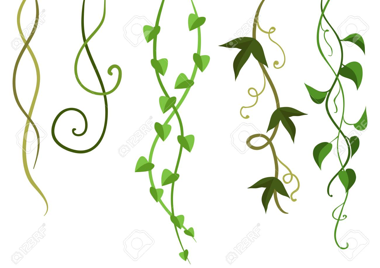Twisted wild lianas branches set. Jungle vines plants. Woody...
