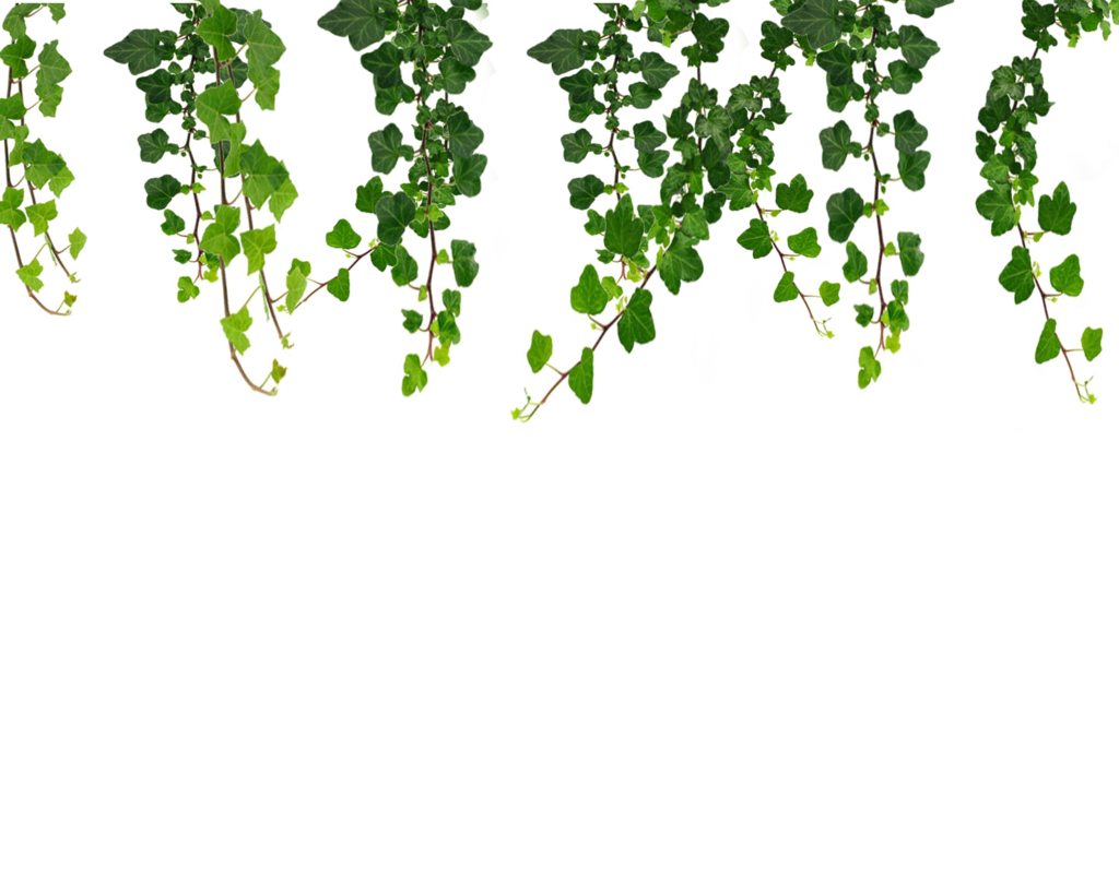 Jungle vine clipart clipart images gallery for free download.