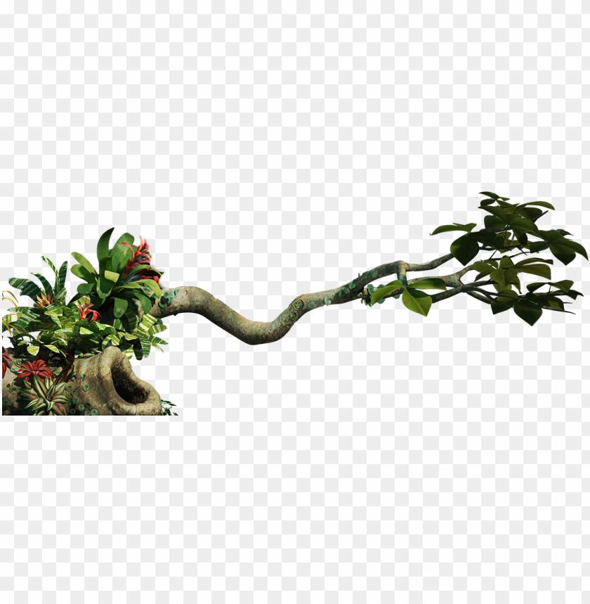 clip art transparent download jungle vine clipart.
