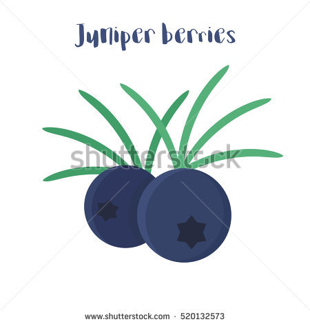 Juniper Berries Stock Images, Royalty.