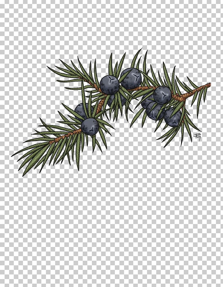Juniper Berry Drawing Art Tree PNG, Clipart, Art, Berries, Berry.