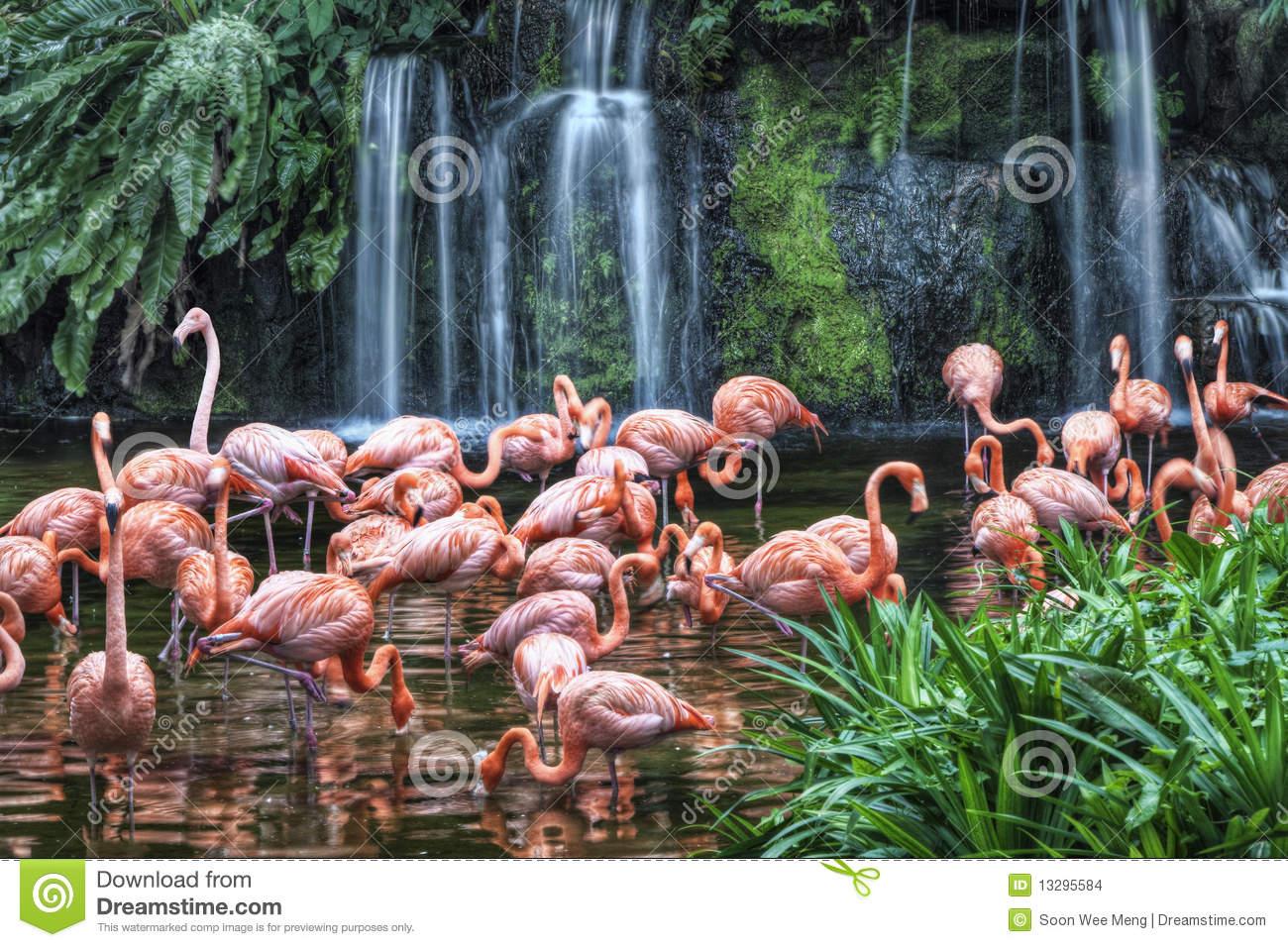Flamingo Lake At Jurong Bird Park Stock Images.