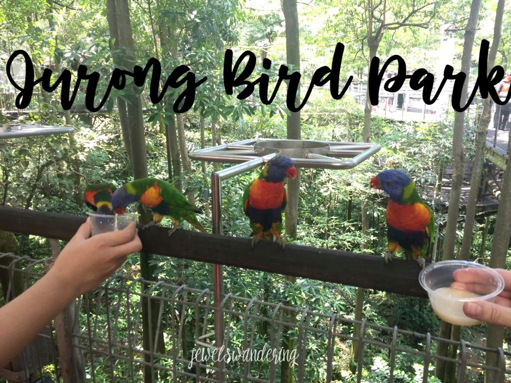 Explore Singapore: Jurong Bird Park.