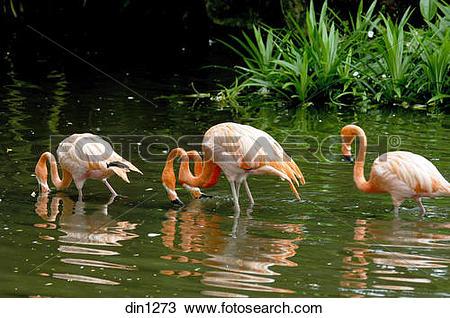 Stock Photo of Flamingo bird in Jurong bird park at Singapore.