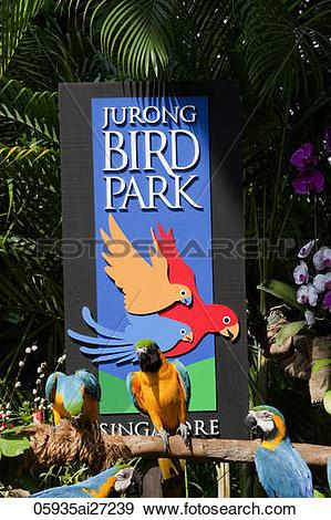 Stock Photograph of Singapore,Jurong Bird Park 05935ai27239.