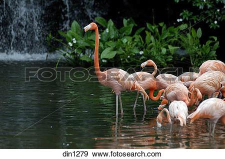 Stock Photograph of Flamingo bird in Jurong bird park at Singapore.