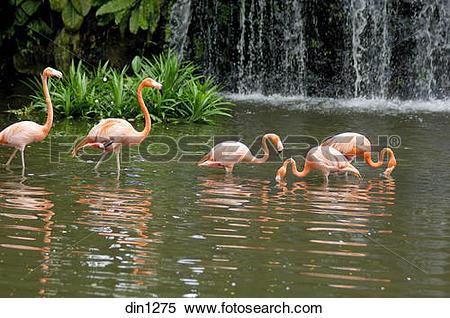 Stock Image of Flamingo bird in Jurong bird park at Singapore.