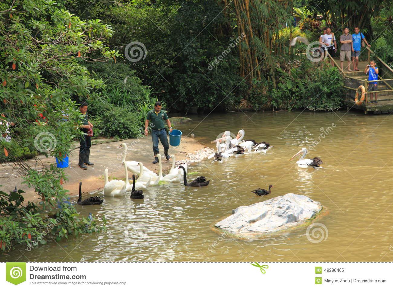 Jurong Bird Park In Singapore Editorial Image.
