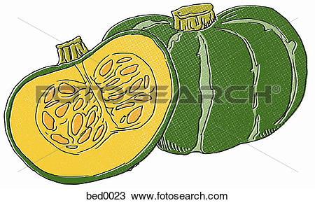 Drawing of Kabocha squash bed0023.