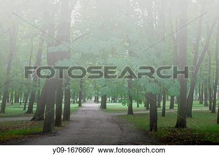 Picture of foggy forest, Kadriorg Park, Tallinn, Harju, Estonia.