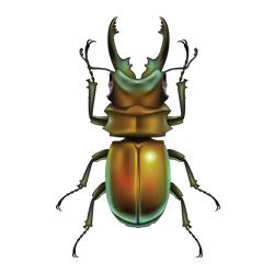 Kostenlose Käfer Bilder, Clipart, Gifs, Grafiken, Images.