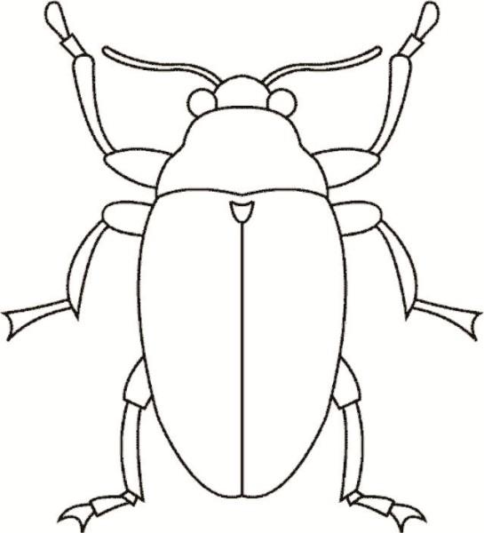 Ausmalbilder von Käfer ausdrucken Malvorlagen kostenlos.