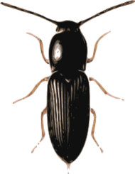 Rhino Beetle Clip Art Download 99 clip arts (Page 1).