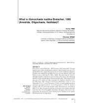 What is Homochaeta naidina Bretscher, 1896 (Annelida, Oligochaeta.