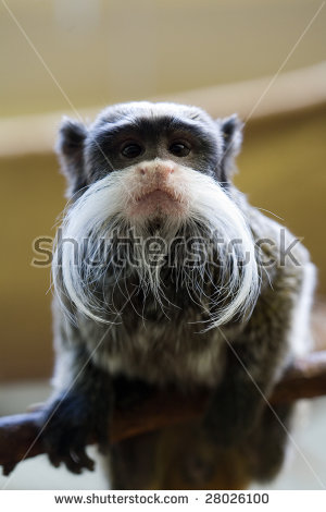 Moustached Monkey Stock Photos, Royalty.