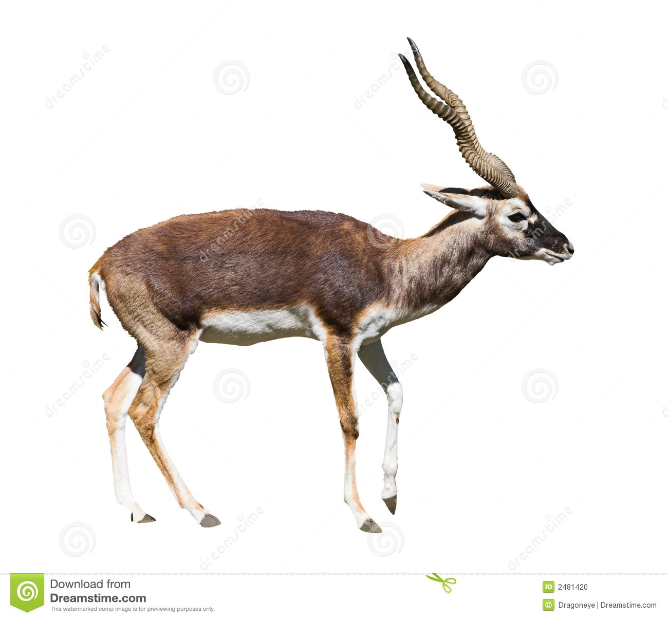 Hiran Animal Clipart.