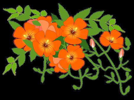 Trumpet, Flowers.