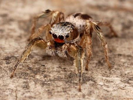 Pavoučí, Nohy.