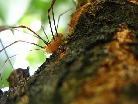 Spider, Legs.