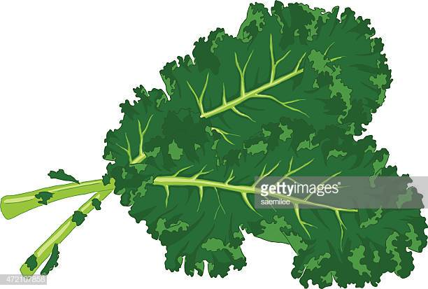 60 Top Kale Stock Illustrations, Clip art, Cartoons, & Icons.
