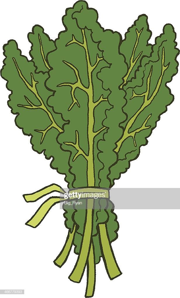 60 Top Kale Stock Illustrations, Clip art, Cartoons, & Icons.