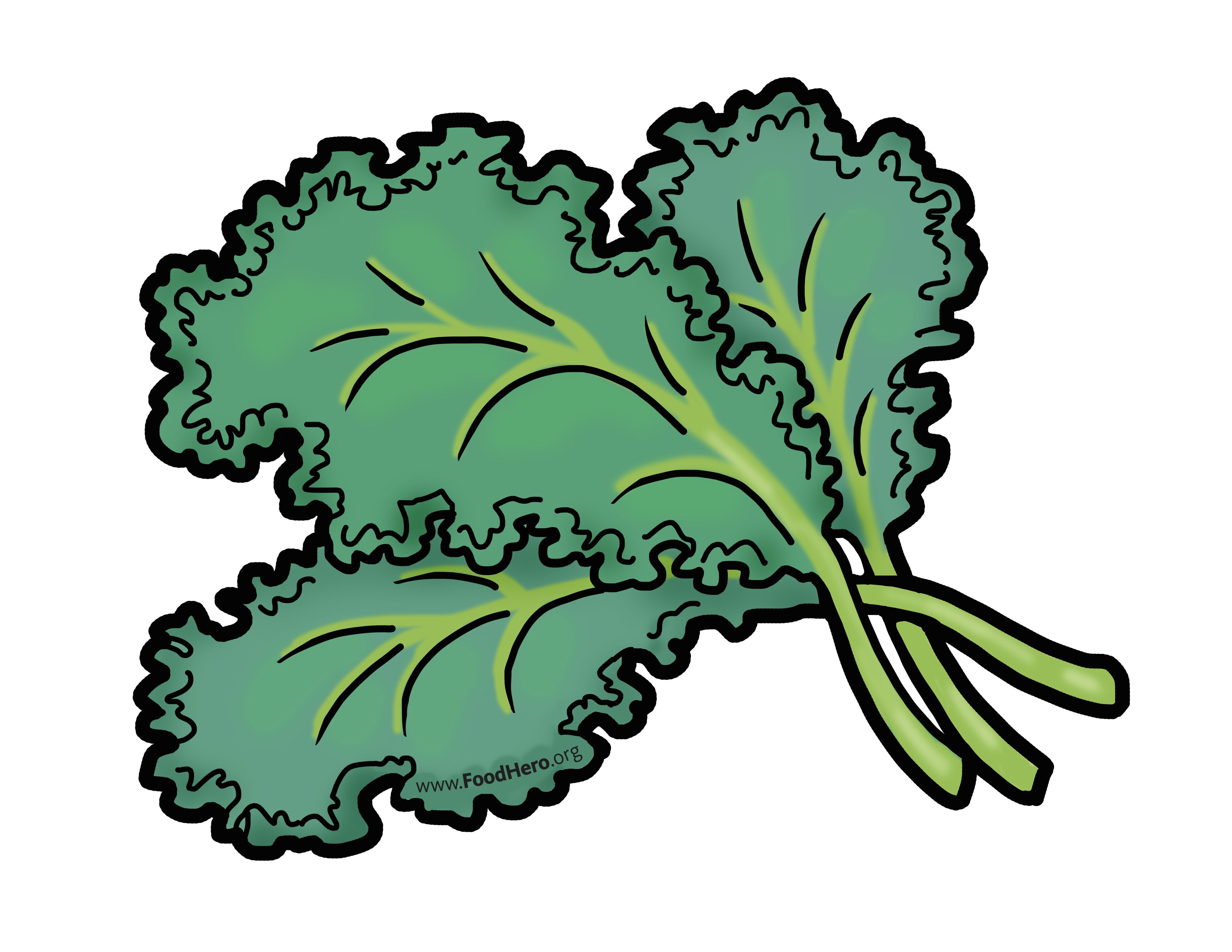Kale illustration. Foodhero.org. #greens #bullentinboards #schoolart.