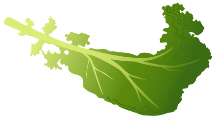Kale clipart #20