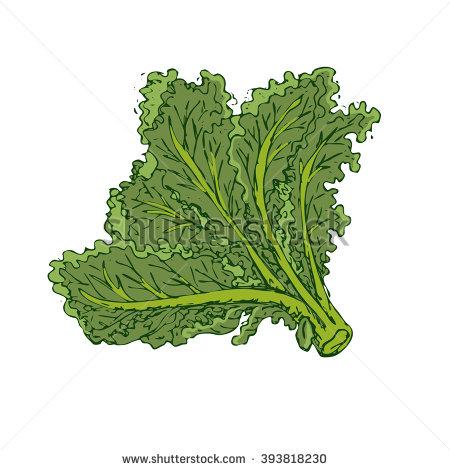 Kale clipart #12