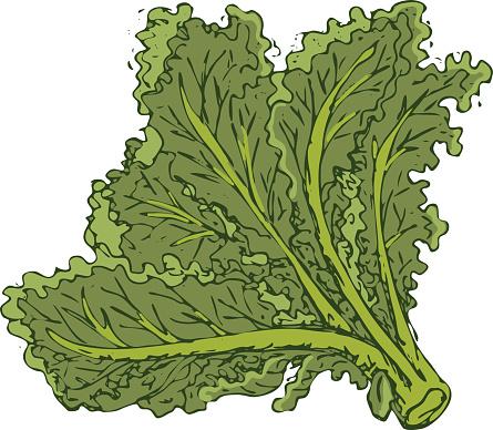 Kale Clip Art, Vector Images & Illustrations.