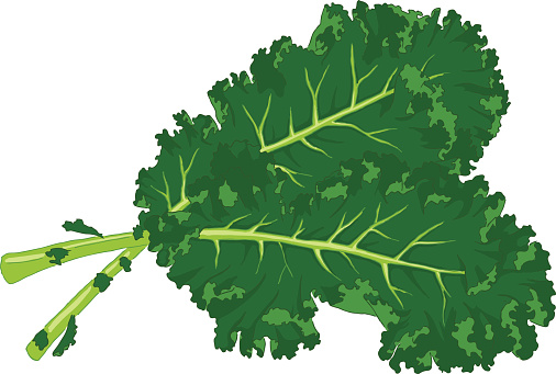 Showing post & media for Kale clip art cartoon.