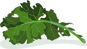Free kale clipart.