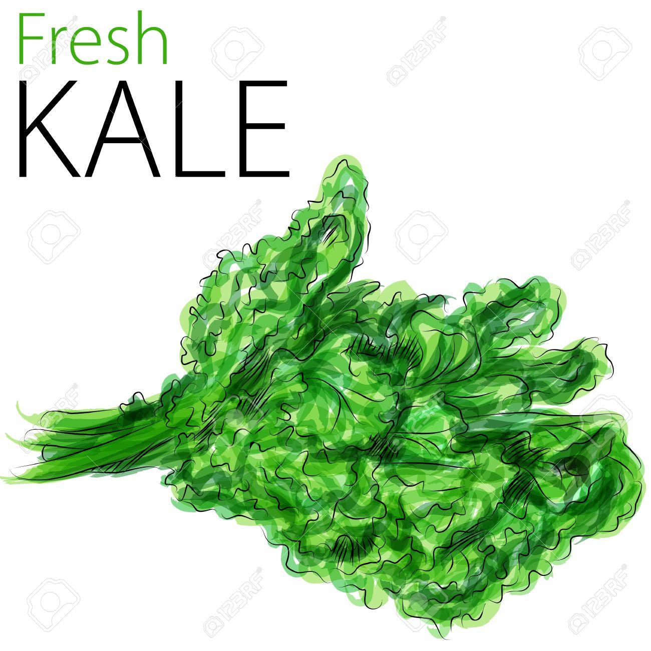Kale clipart #13