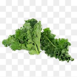 Kale PNG Images.