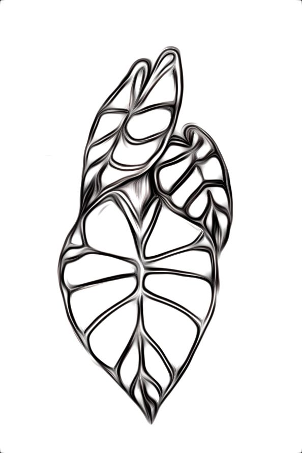 13 Leaf drawing kalo for free download on Ayoqq cliparts.