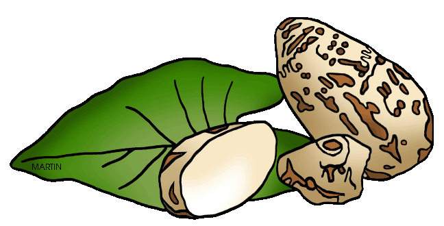 United States Clip Art by Phillip Martin, State Plant of Hawaii.