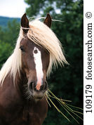 Bald horse Stock Photo Images. 184 bald horse royalty free images.