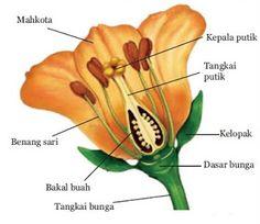 gambaran bunga,gambarbunga,foto2 bunga,cara menggambar bunga.