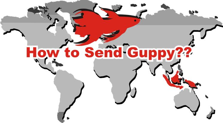 Send Guppy.