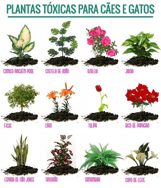 Plantas Tóxicas para Cães e Gatos.