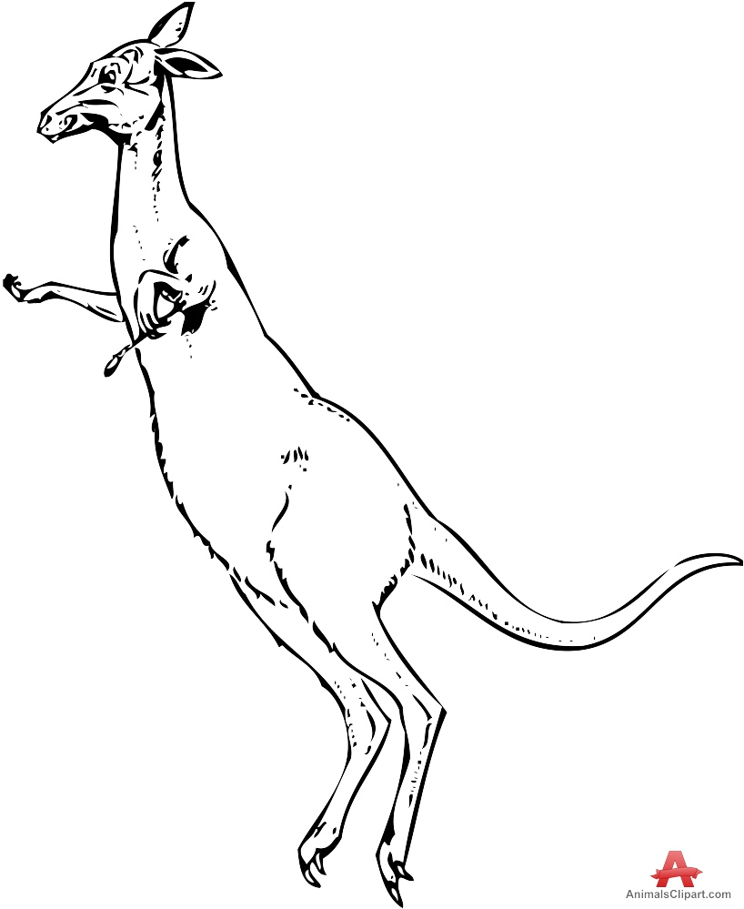 Jumping Kangaroo Clipart Outline.