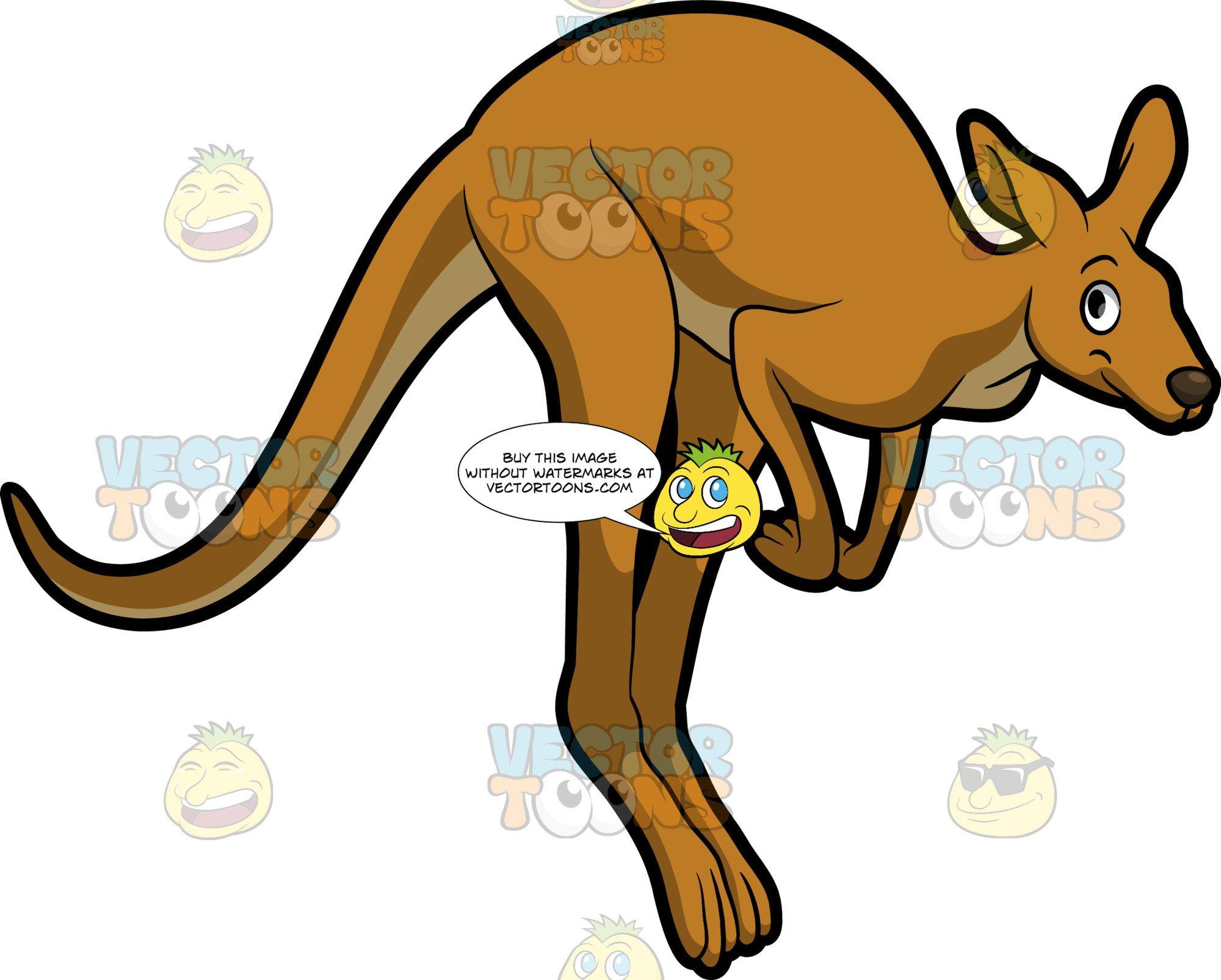 A Jumping Kangaroo.